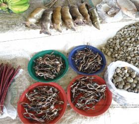Hin Nam No Enables Khammouane Province to Better Understand Wildlife Trade Dynamics
